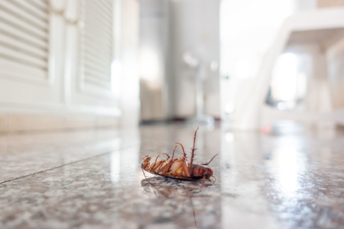image of dead bug